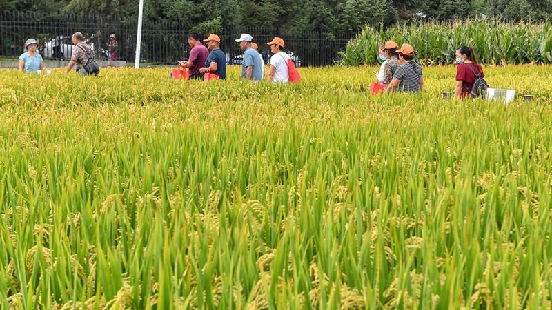 第20回中國長春國際農業・食品博覧會が開幕